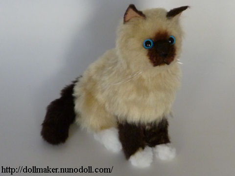 Ragdoll Kitten Body